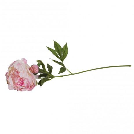 Peony flower pink Single, PTMD-0