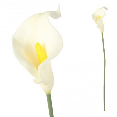 Calla bloem white Single bloem m, PTMD-0