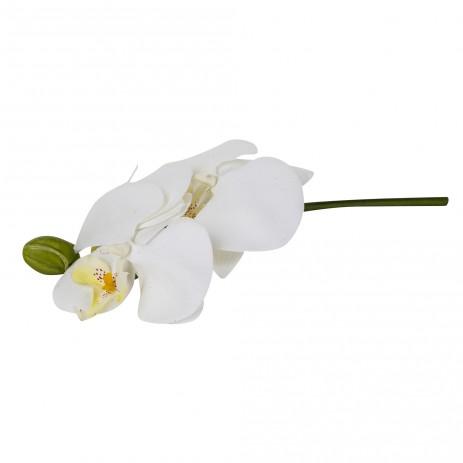 Orchid bloem white Phalaenopsis mini 3 flowers, PTMD-0