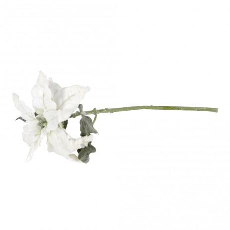 Garden bloem white poinsettia S, PTMD-0