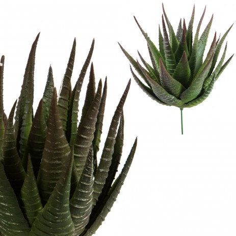 Leaves plant green aloe plant, PTMD-0