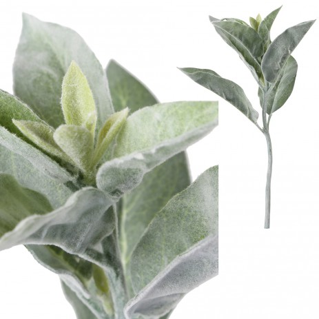 Leaves plant green branch oval leaves powdered, PTMD-0