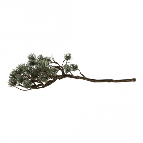 Twig plant green pine bunches and twigs , PTMD-0