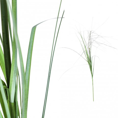 Leaves plant green simple Grass - PTMD-0