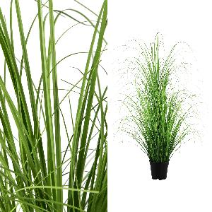 Leaves plant green Grass in pot - PTMD-0