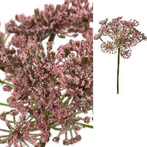 Garden bloem pink alium, PTMD-0