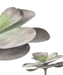 succulent plant light purple Kalanchoe, PTMD-0