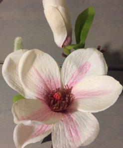 Magnolia bloem pink spray 1 bud - PTMD-0
