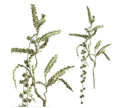 Fern plant White and Gold branch - PTMD-0